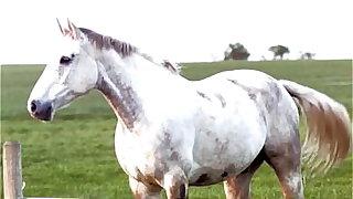 Horny Milf takes pompously horse blarney dildo compilation